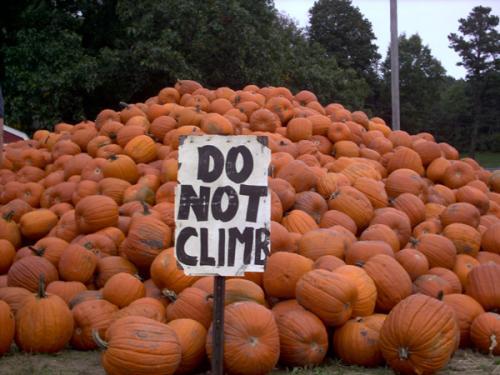 pumpkin duh.jpg (132 KB)