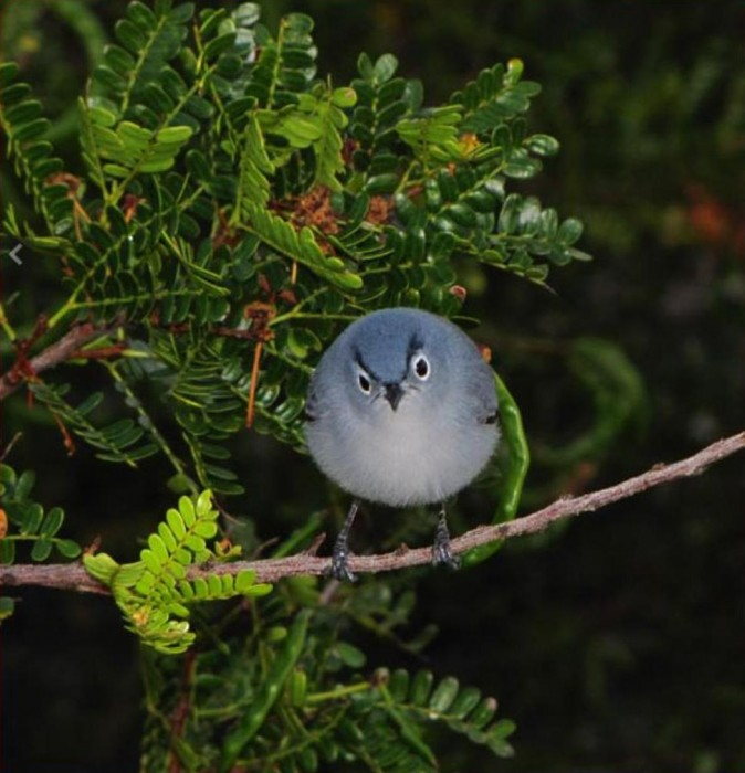 angry-bird.jpg (94 KB)