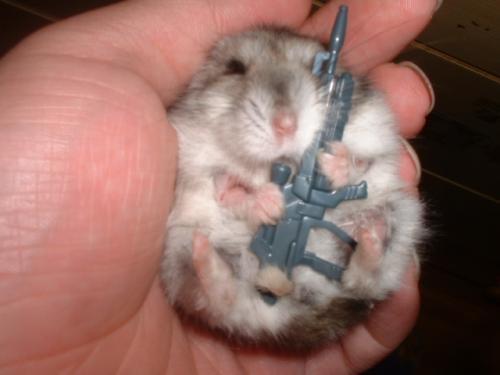 hamster soldier.jpg (107 KB)
