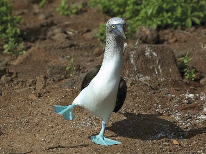 bird.jpg (308 KB)