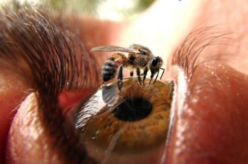 bee_in_eye.jpg (33 KB)