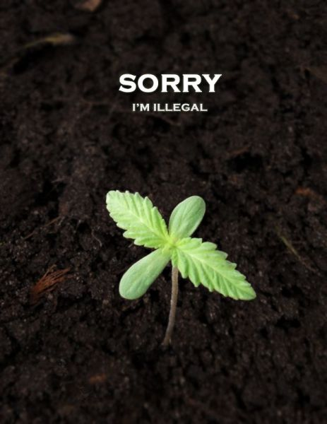 Sorry Illegal.jpg (35 KB)