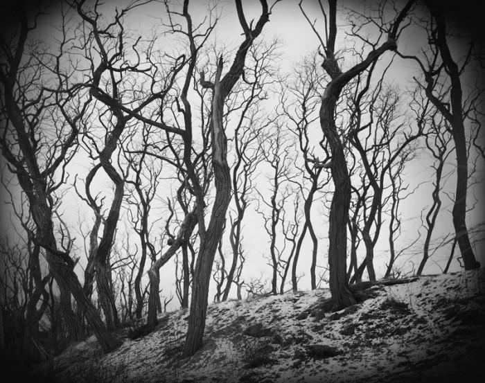 trees.jpg (275 KB)