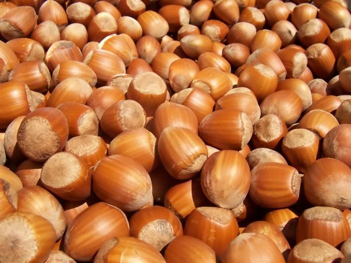 Hazelnuts.jpg (447 KB)