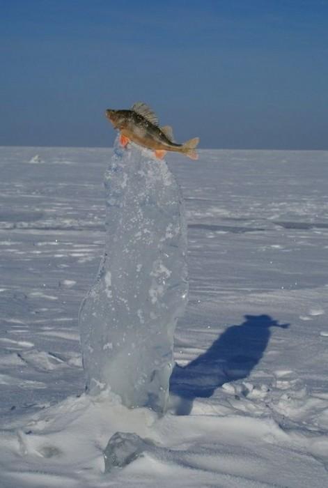 fish-on-ice.jpg (63 KB)