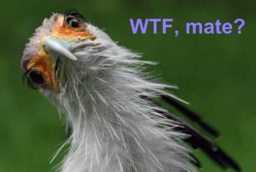 WTF Bird.jpg (136 KB)