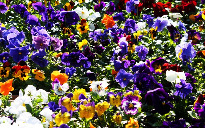 o542257 700x437 flower collection Wallpaper flowers