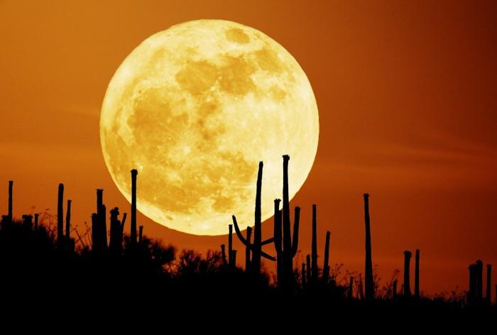 Harvest-Moon.jpg (171 KB)