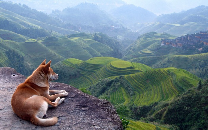 o677236 700x437 resting dog
