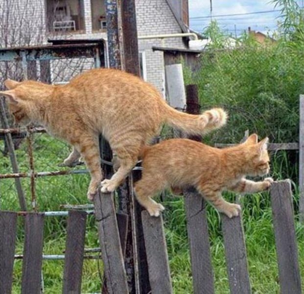 catspassing4 Cats Passing Each Other wtf lolcats
