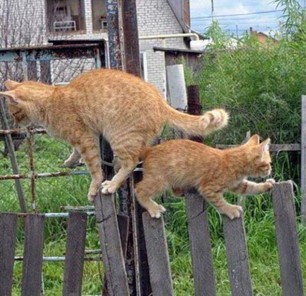 catspassing4.jpg (212 KB)