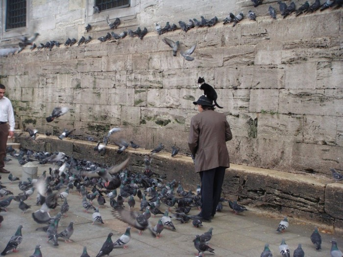 Istanbul.jpg (278 KB)
