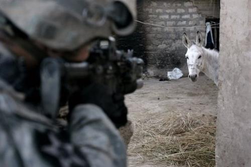 Donkey Jihad.jpg (33 KB)