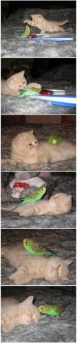 kitty tamed.jpg (195 KB)
