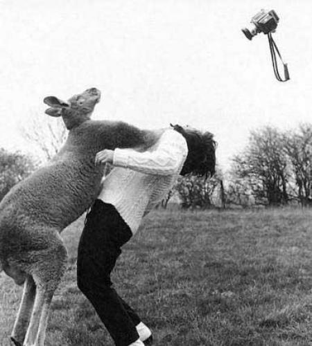 kangaroo punch.jpg (39 KB)