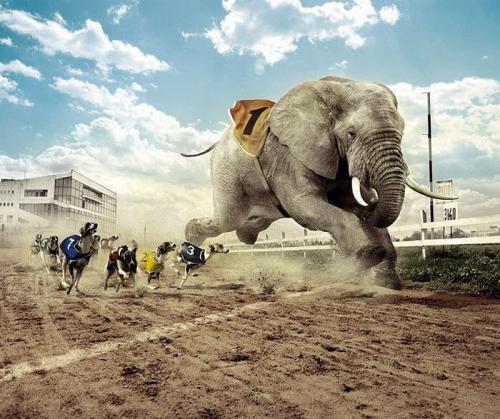 200801_elefante-carrera.jpg (175 KB)