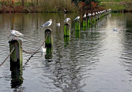 Birds.jpg (265 KB)