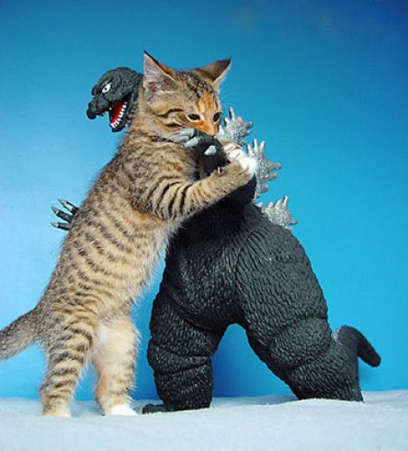 Cat vs Godzilla.jpg (63 KB)