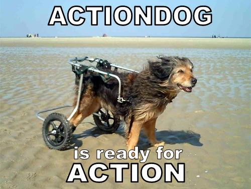 Actiondog.jpg (153 KB)