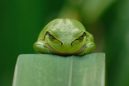 frog.jpg (236 KB)