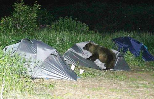 Bear Scare.jpg (102 KB)