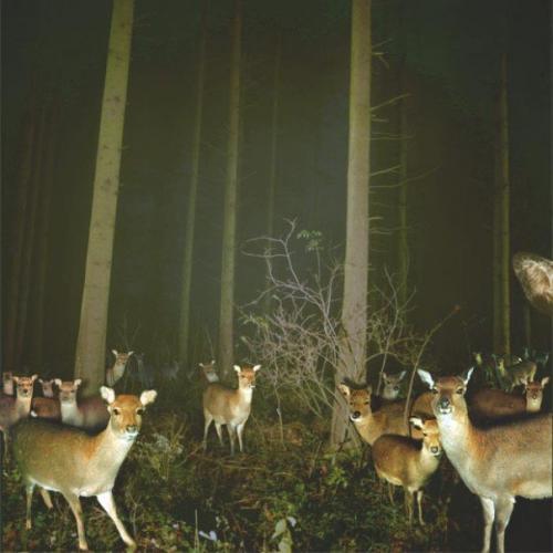 Deer Party.jpg (59 KB)