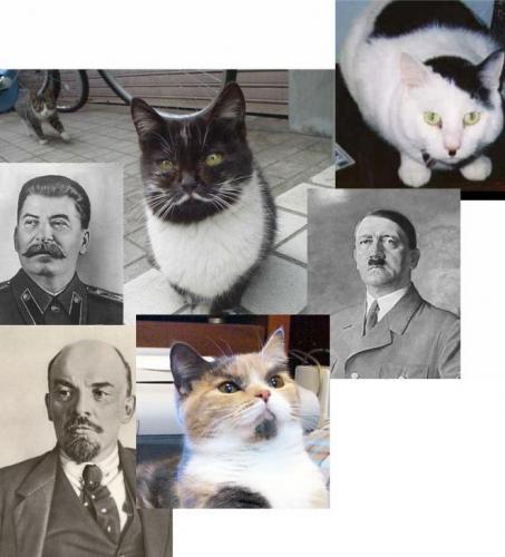 Dictator Cats.jpg (92 KB)