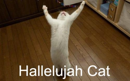 halcat.thumbnail Hallelujah Cat Religion Humor Cute As Hell Animals