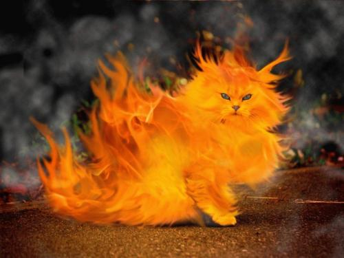 fire cat.jpg (100 KB)