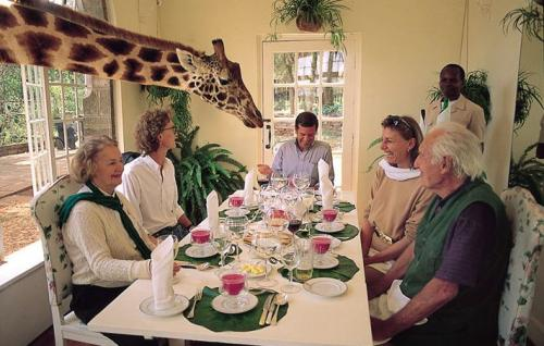 Who Invited The Giraffe.jpg (83 KB)