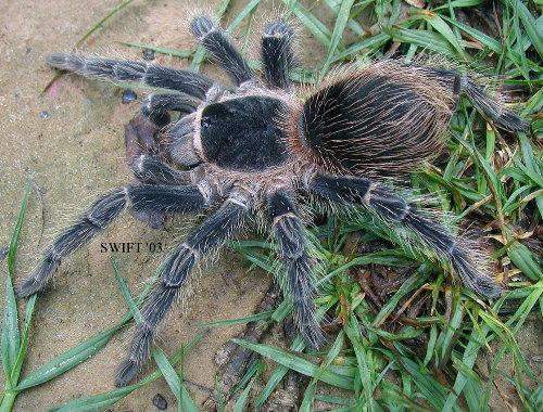 spiderpic3.jpg (91 KB)