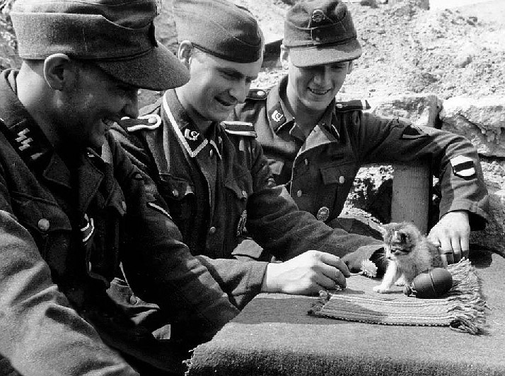 nazis and kittens.jpg (150 KB)