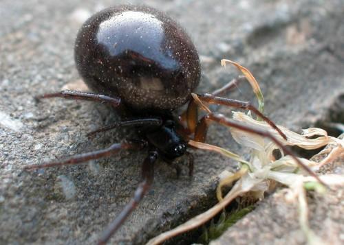 spider1.jpg (82 KB)