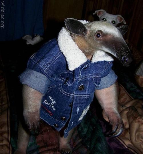 anteater.jpg (74 KB)