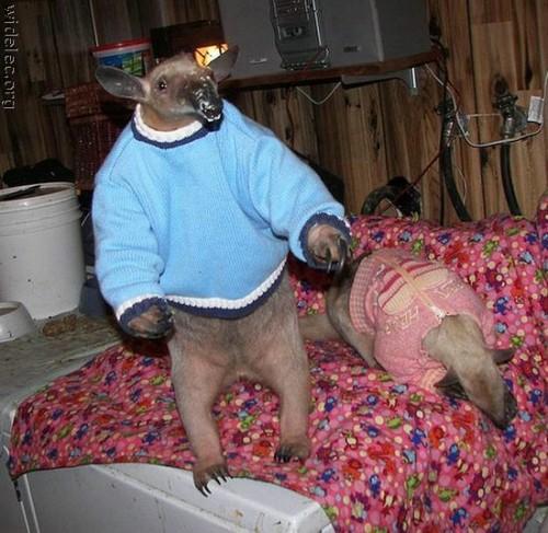 tamandua 500x487 Stylin anteater Cute As Hell Animals
