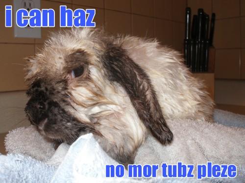 bunny1.jpg (975 KB)