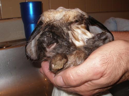 bunny2.jpg (956 KB)