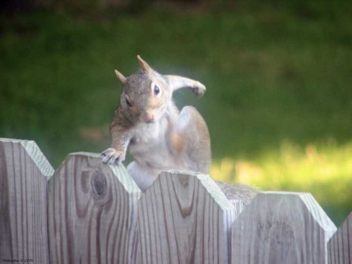pissed off squirrel.jpg (23 KB)