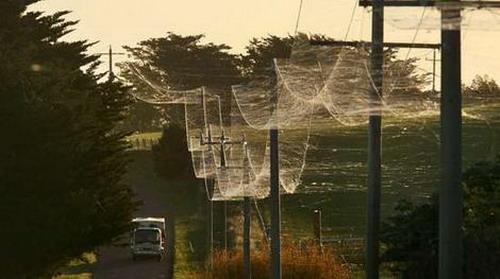spider01 Spiderwebs wtf