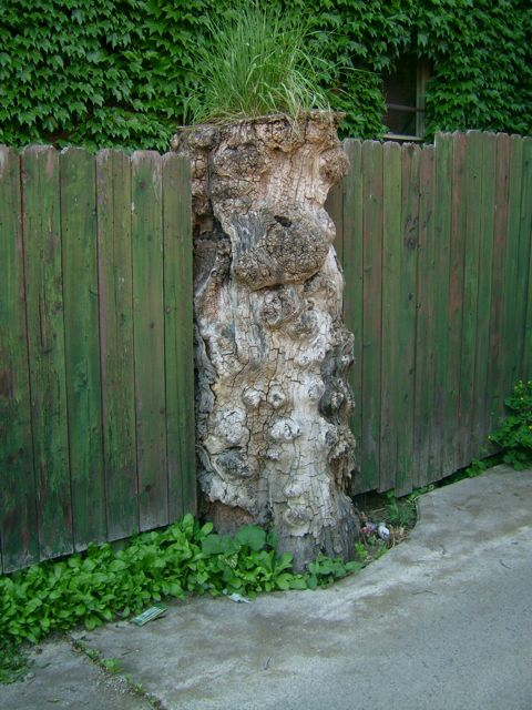stump.jpg (77 KB)