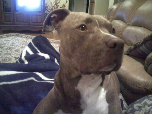 zeuse 500x375 My dog Cute As Hell Animals