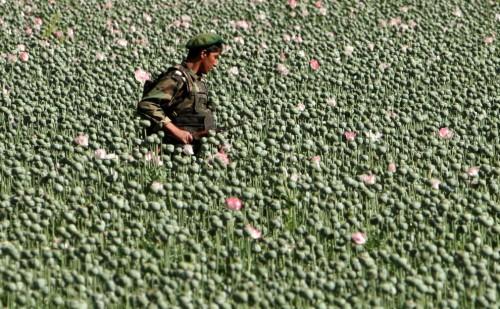 afghanistan1.jpg (318 KB)