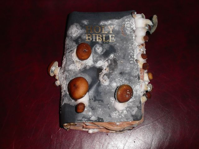moldy bible Mouldy Bible Religion Humor Books