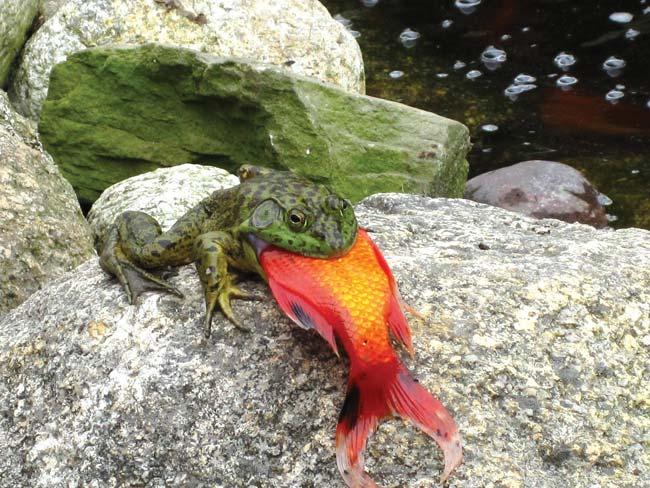 frog.jpg (78 KB)