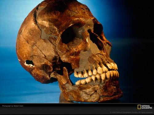 prehistoric-skull-clark-690736-lw.jpg (220 KB)