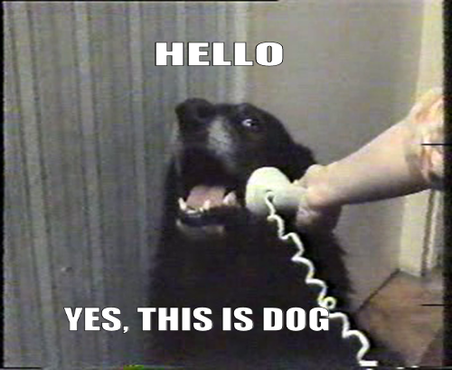 hello-yes-this-is-dog-1318688317p.png (231 KB)