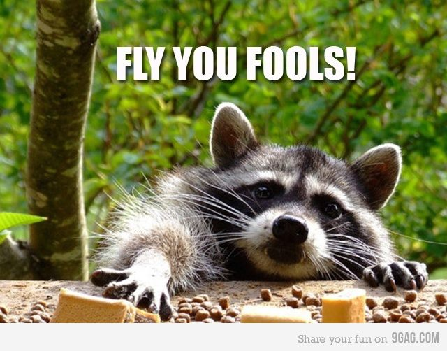 383633 1700560769930 1715261052 849071 766694747 n Fly You Fools! racoons Humor