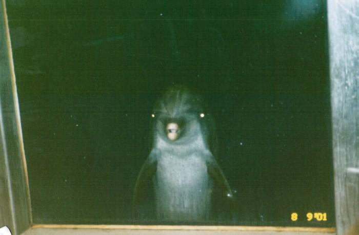 dolphin-watching.jpg (255 KB)
