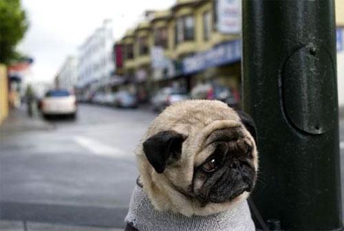 depressdog01.jpg (28 KB)