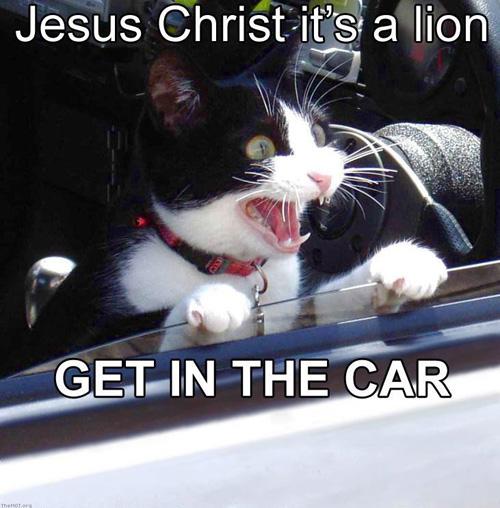jesus_christ_its_a_lion.jpg (92 KB)